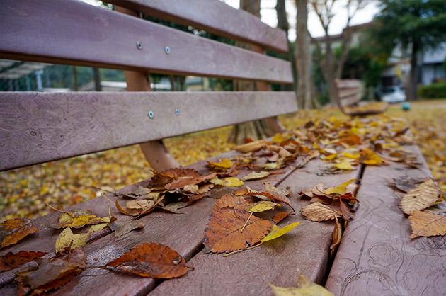 取手市白山かえで公園紅葉で葉っぱが落ちている綺麗なベンチ