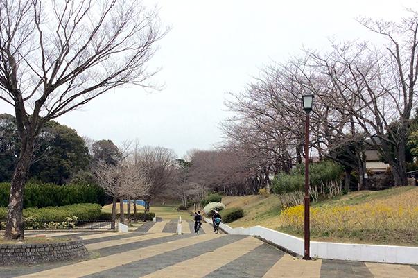 戸頭公園桜開花情報