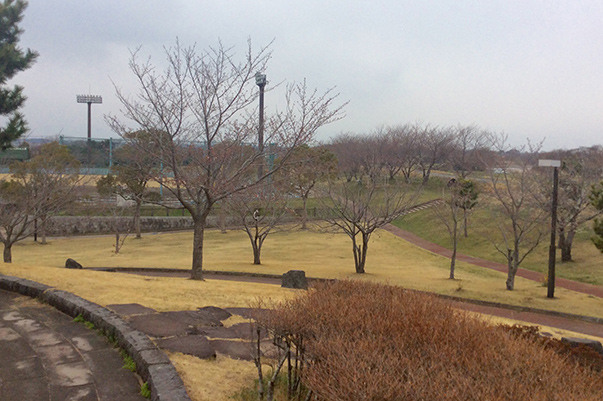 藤代スポーツセンター桜開花情報