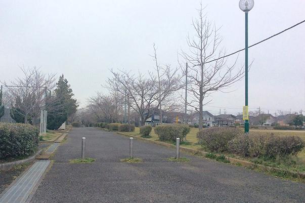 とねーがネット取手市桜ヶ丘近隣公園桜開花情報